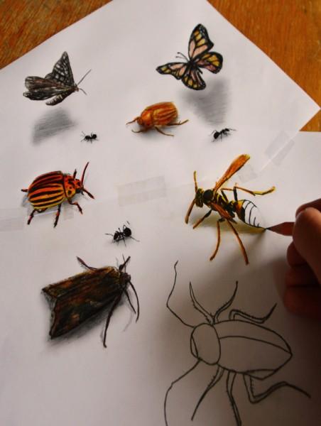 dibujo-lapiz-3D-insectos-452x600