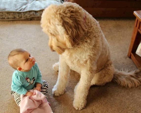 22-bebes-perros-3