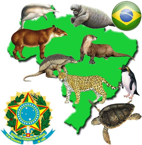 Animales en peligro de extinsión por pais  (6)