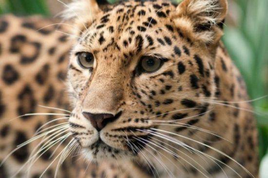 Animales extintos y en peligro  (1)
