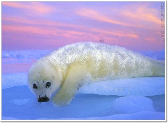 Animales extintos y en peligro  (10)