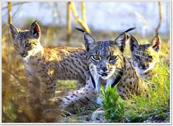 Animales extintos y en peligro  (17)