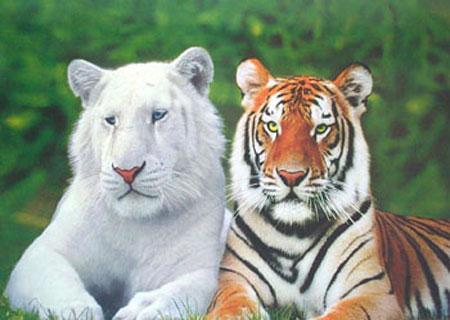 Animales extintos y en peligro  (19)