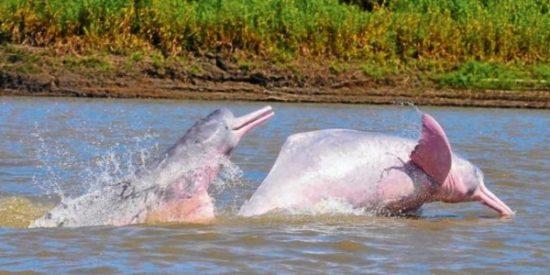 Animales extintos y en peligro  (2)