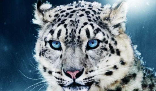 Animales extintos y en peligro  (20)