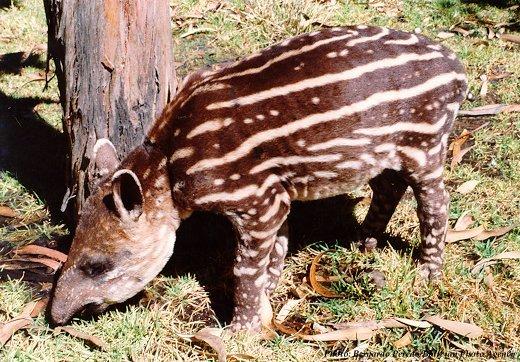 Animales extintos y en peligro  (28)