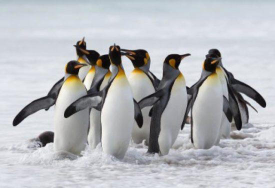 Animales extintos y en peligro  (3)