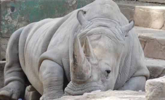 Animales extintos y en peligro  (8)