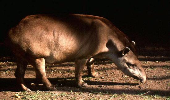 Animales extintos y en peligro  (9)