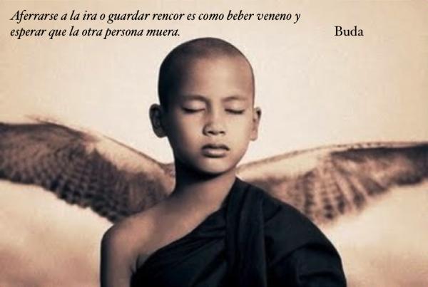 Frases De Buda Amor Unifeed Club