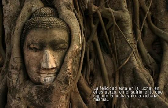 Buda frases Sabias (2)
