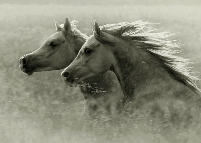 Hermosas imágenes de Caballos Salvajes, fotos de animales ...