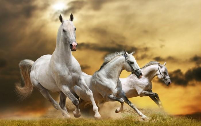Hermosas imágenes de Caballos Salvajes, fotos de animales ... 7 White Horses Running Painting