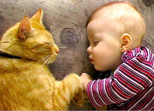 bebes y niños con gatos  (1)
