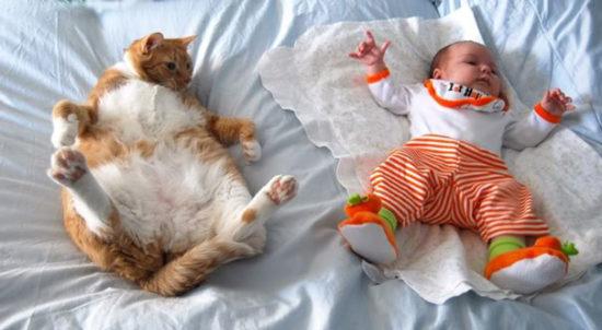 bebes y niños con gatos  (4)