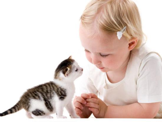 bebes y niños con gatos  (6)