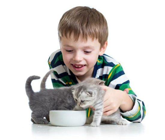 bebes y niños con gatos  (7)
