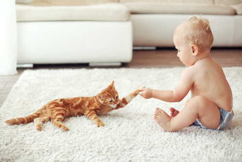 bebes y niños con gatos  (8)