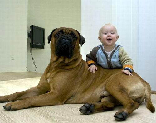 nenes-y-mascotas-05