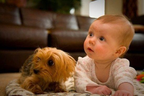 niños y bebes con perros  (1)