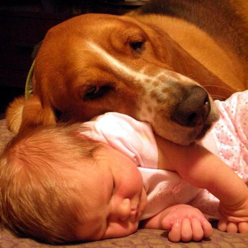 niños y bebes con perros  (10)