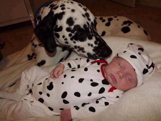 niños y bebes con perros  (13)