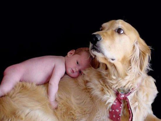 niños y bebes con perros  (17)