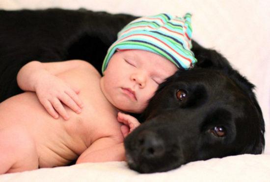 niños y bebes con perros  (21)