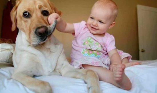 niños y bebes con perros  (22)