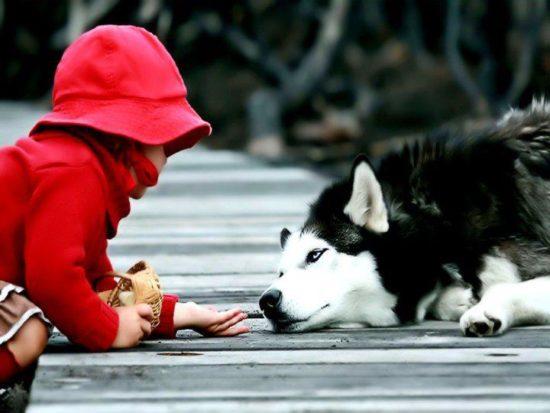 niños y bebes con perros  (26)