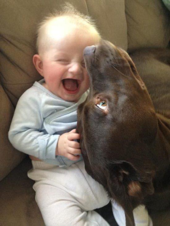 niños y bebes con perros  (27)