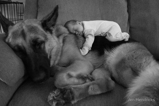 niños y bebes con perros  (28)