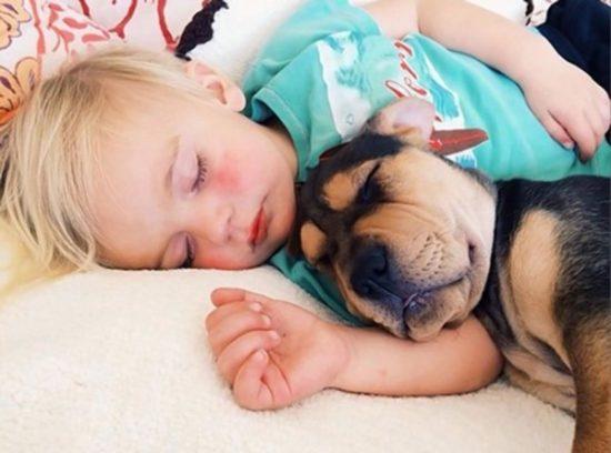 niños y bebes con perros  (4)