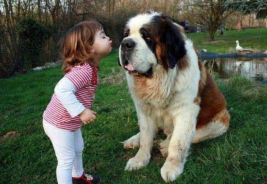 niños y bebes con perros  (6)