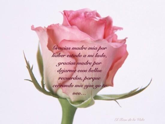 Feliz dia de la Madre - frases - mensajes  (8)