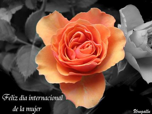Frases para el dia de la Mujer 8 de marzo para compartir (4)