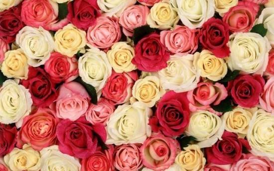 Lindas Flores de Felíz Día de la Mujer con Mensajes (3)