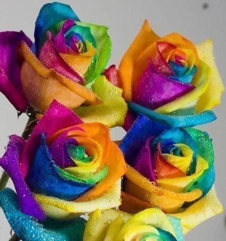 Lindas Flores de Felíz Día de la Mujer con Mensajes (6)