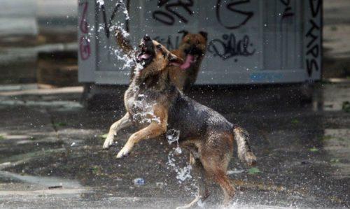 día del perro callejero  (10)