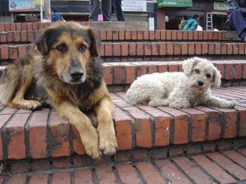 día del perro callejero  (16)