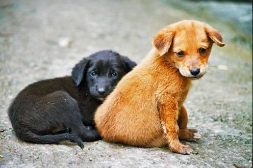 día del perro callejero  (18)