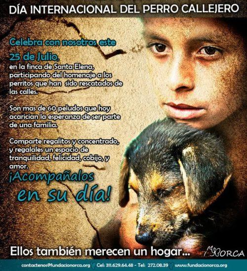 día del perro callejero  (19)