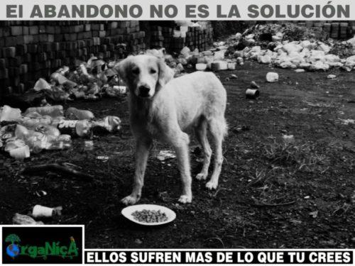 día del perro callejero  (7)