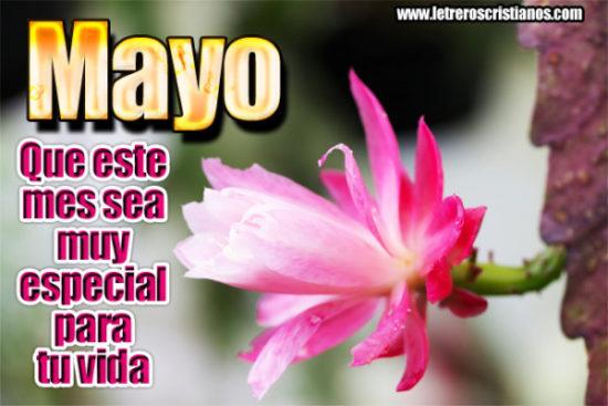 Bienvenido Mayo - Hola Mayo (11)
