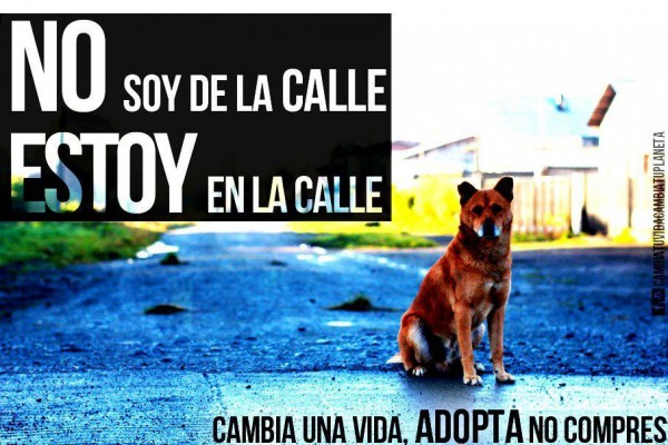 Dia-internacional-perro-situacion-calle