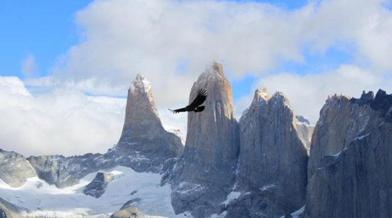 Torres del Paine paisajes, parque, flora, fauna (14)