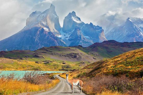 Torres del Paine paisajes, parque, flora, fauna (2)