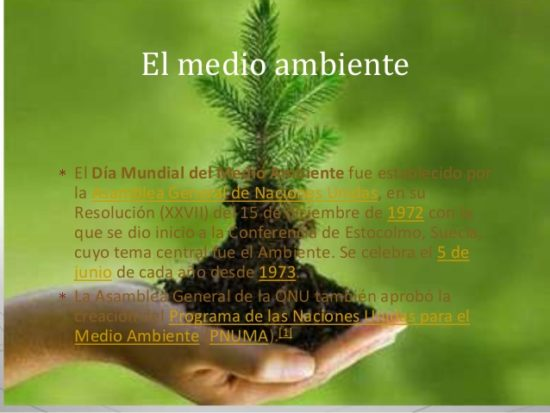 día del medio Ambiente (12)