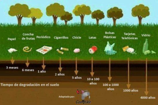 día del medio Ambiente (17)