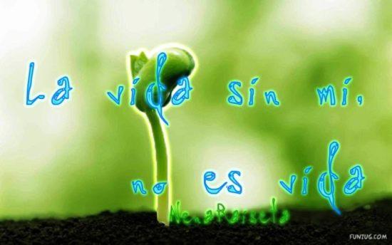 día del medio Ambiente (21)